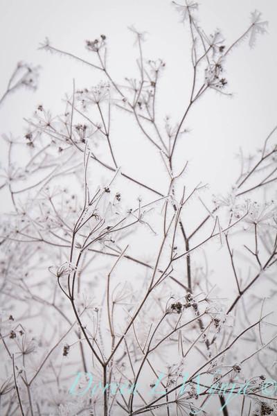 Winter frost_9325.jpg