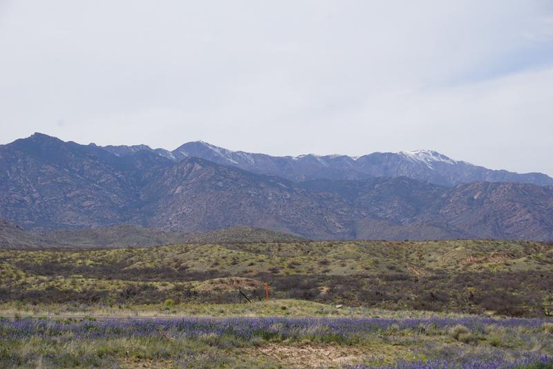 Arizona-b.jpg