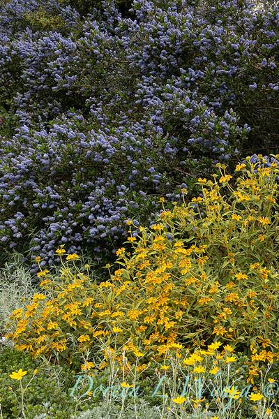 Argyle landscape_1163.jpg