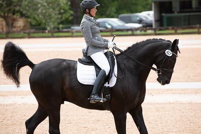Horse 417
