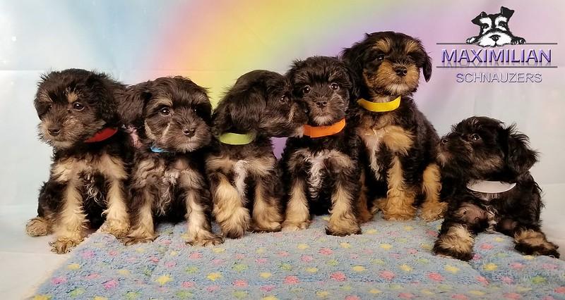 Yanabell Pups 017.jpg