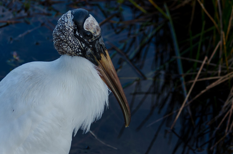 JRF-EVERGLADES-NATIONAL-PARK-14.jpg