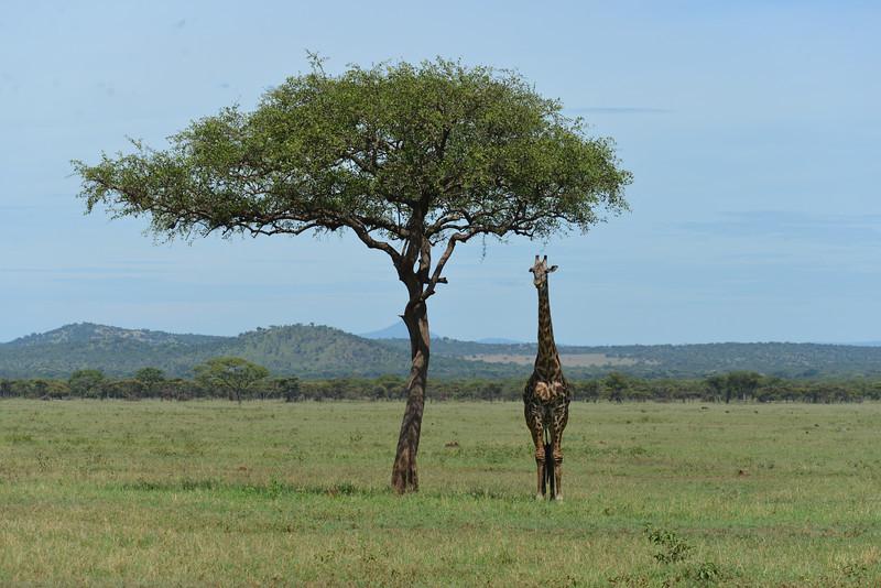 East Africa Safari 259.jpg