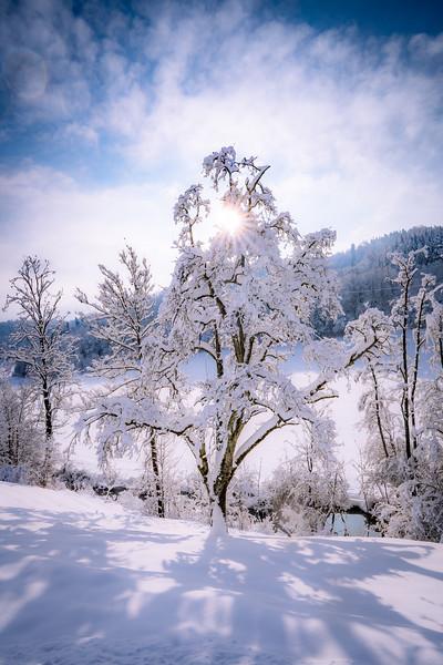 Winterthur-Winter-04350.jpg