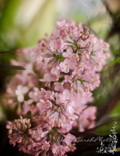 pink blooms logo.png