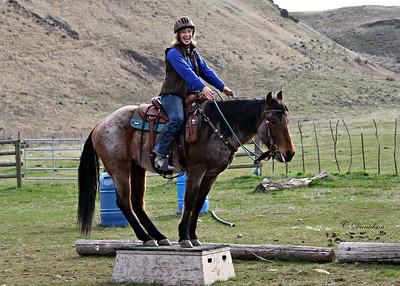 Horse 2018