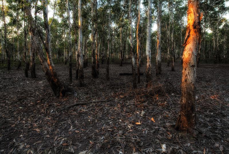 Dry Paperbark Swamp