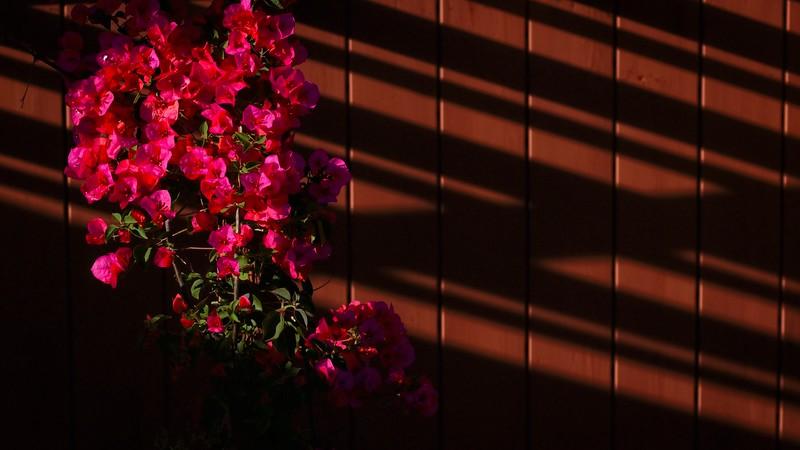 DSCF9596_toned_brighter.jpg