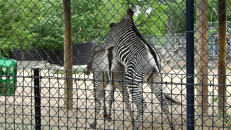 Denver Zoo 2018 (2726)a.MOV