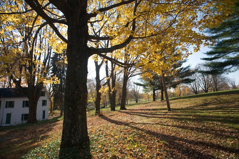 Back lit image of a big maple tree, CT, USA