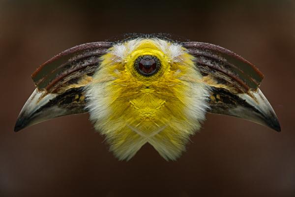 Bird's Eye View.jpg