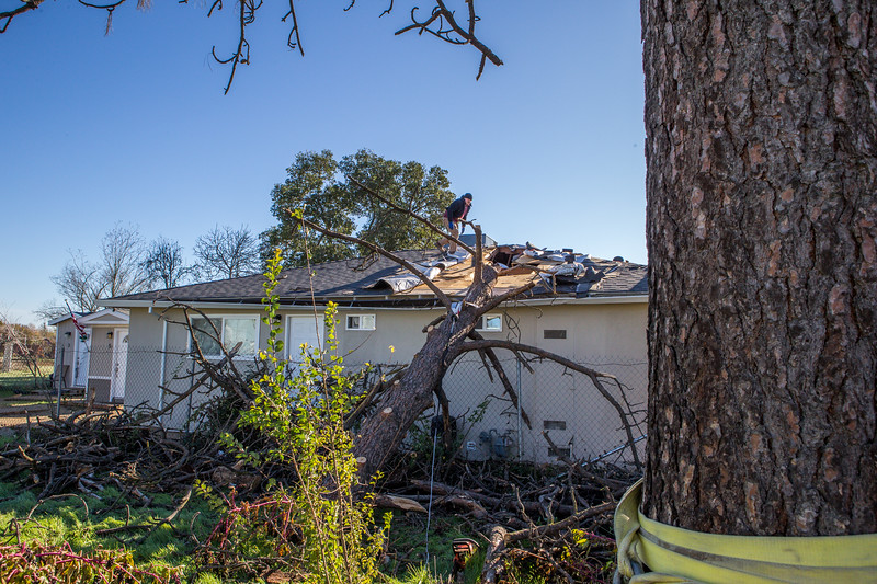5671 Wallace Ave - Tree 1030am 12 16 2017 Extremly Windy Conditions-87.jpg
