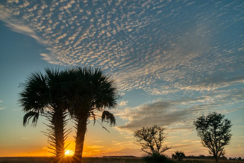 Florida Prairie 2020-1.jpg