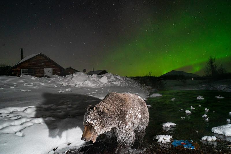 Ice Bears0020.jpg