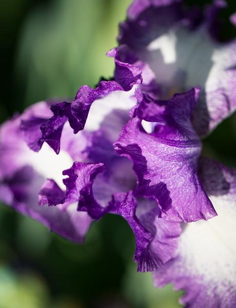 Flowers 5-5 2.jpg