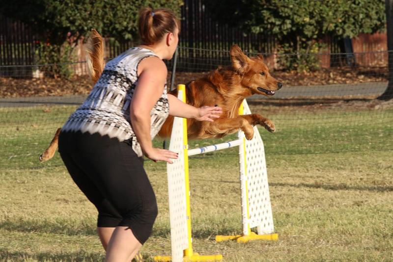 11-4-2018 Border Terrier-2667.jpg