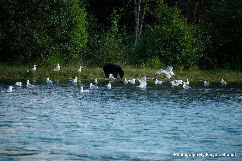Alaska Kenai Fjords0115.JPG