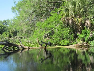 5-2011 Silver River