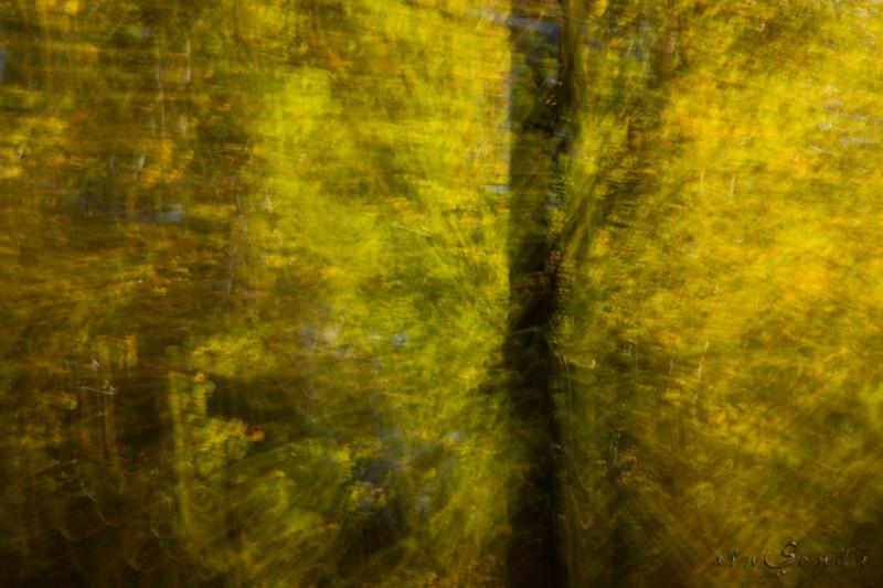 Espíritus del bosque. Oza IV