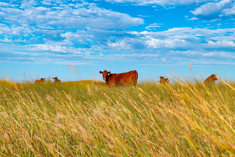 Horn Ranch-1343.jpg