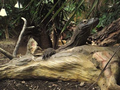 Zoo with Feldman
