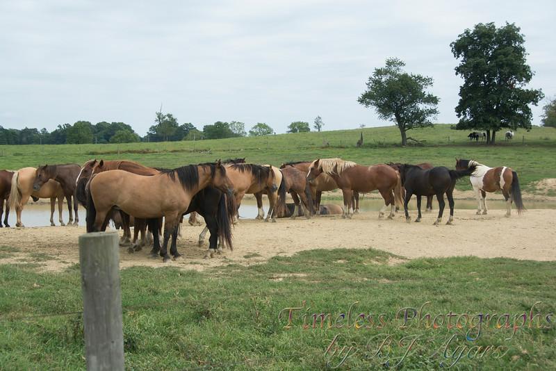 2014_Horses_Woodstown_20.jpg
