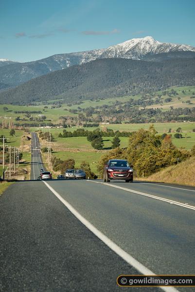 Buller Road