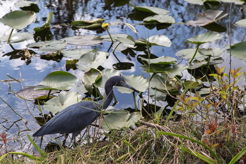 Everglades NP-0308-Select_E.jpg