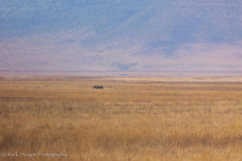 Ngorongoro-61.jpg