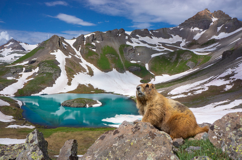 Island_Lake_Marmot.jpg