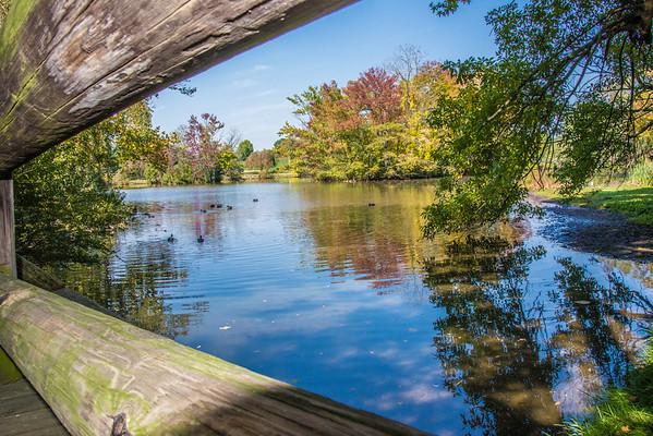 Duck Pond at Virginia Tech, VA