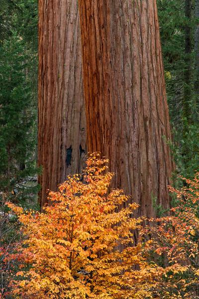 Treesome