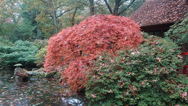 Japanese Garden The Hague, October 23, 2019