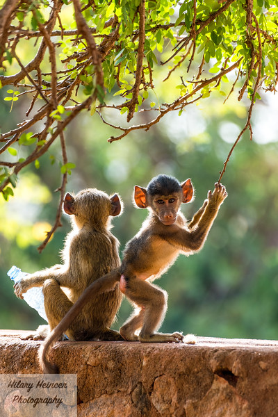 Kenya Wildlife-46.jpg