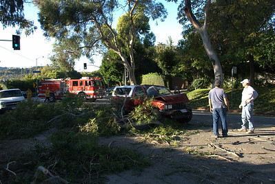 Traffic Collision into Downed Tree (LAFD)
