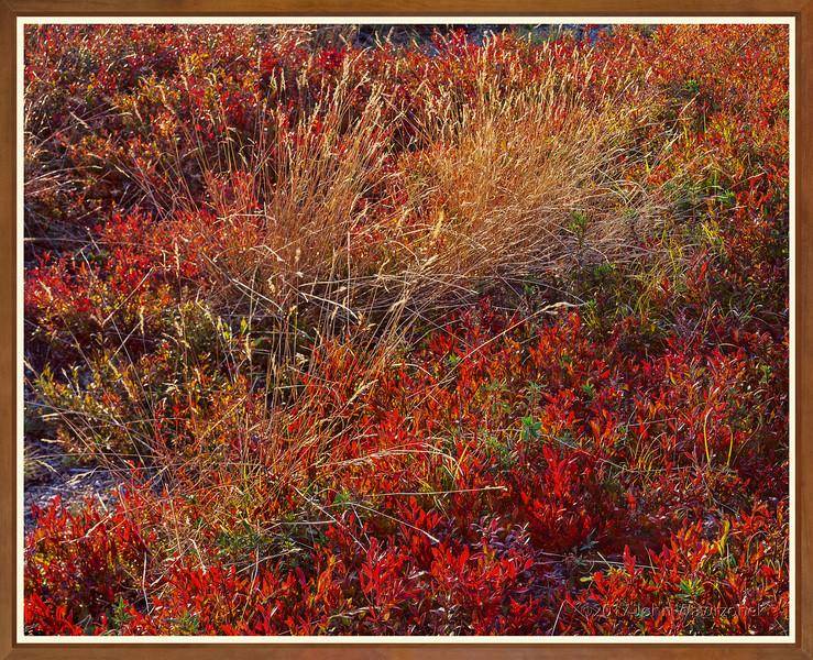 Wild Grass & Blueberries