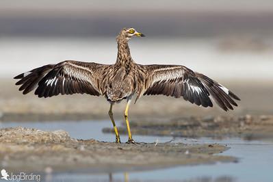 Birds-Tumbing