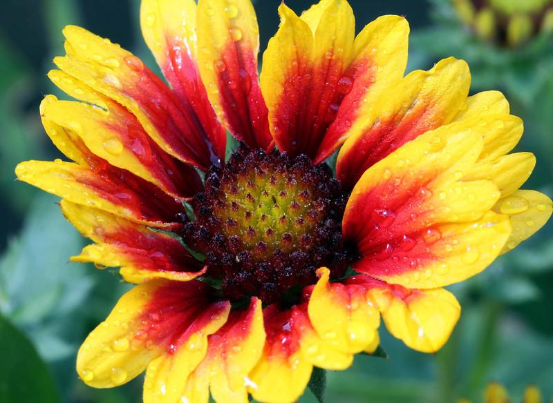 fire flower 2.jpg