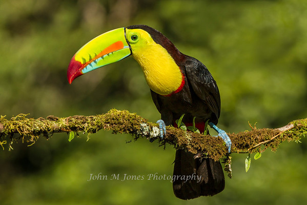 Costa Rica Nature Trips