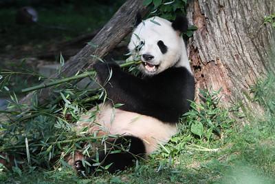 National Zoo - 6 Jun 2010
