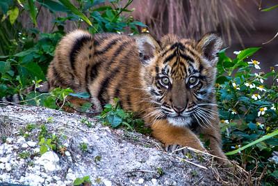 Zoo Miami February 2016