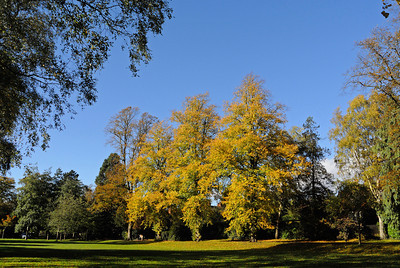 Bournville Autumn