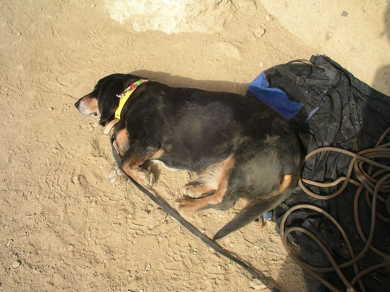 Snickers at the belay taking a rest.