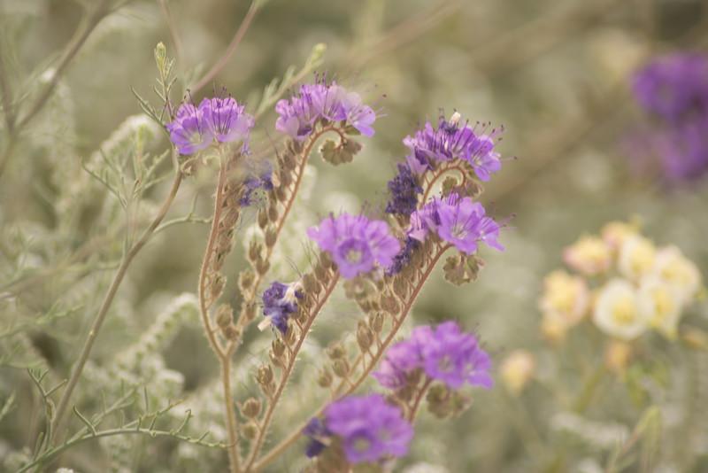 soft purples-82.jpg