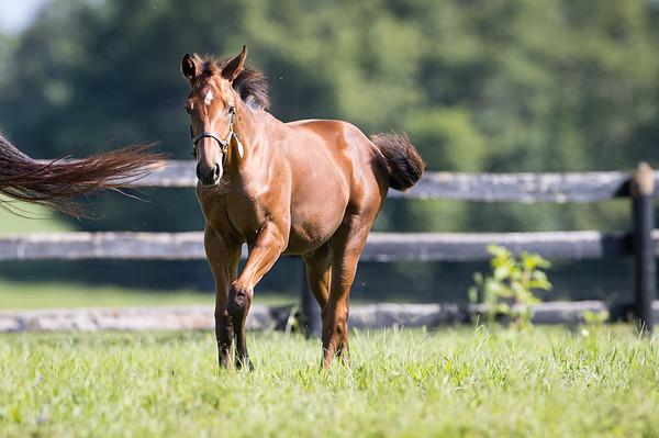 Demarcheier Foals - August '21