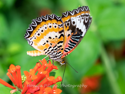 Butterflies & Bees July 2019 Brookside Gardens