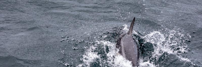 2019_01_Antarktis_00464.jpg