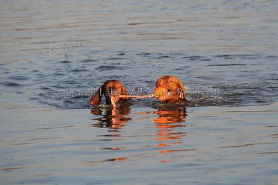 Carlsbad Lagoon - Sept 2010