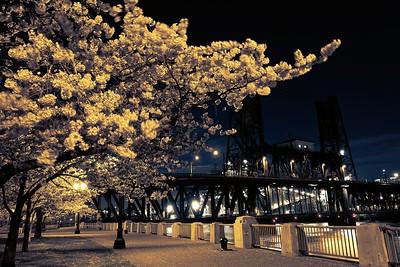 Portlandia II, Cherry Blossom - 2018/03/28
