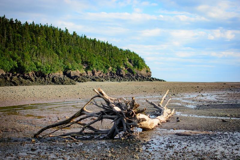 Point Wolf Beach-485.jpg